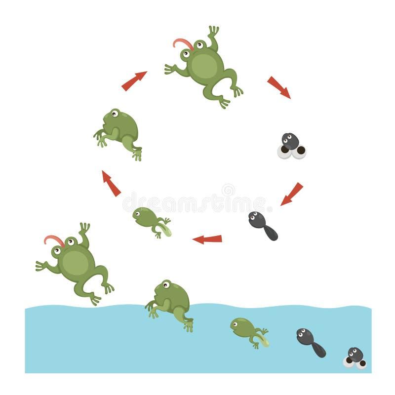 Het levenscyclus van Kikker stock illustratie