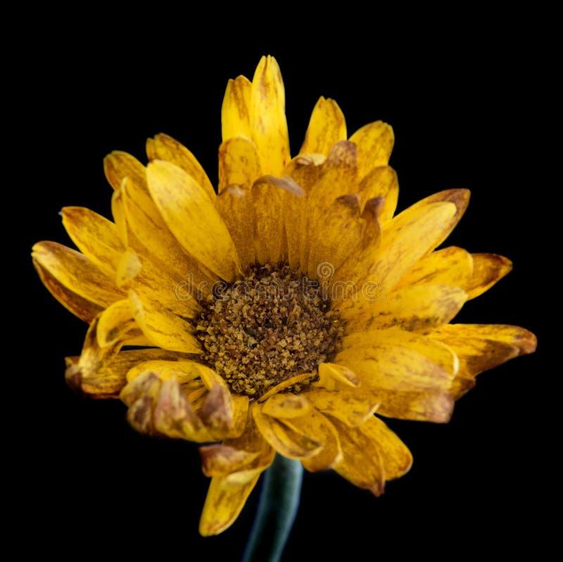Het levensmelancholie met een bloem royalty-vrije stock foto