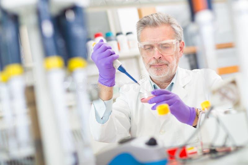 Het levenswetenschapper die in het laboratorium onderzoeken stock foto