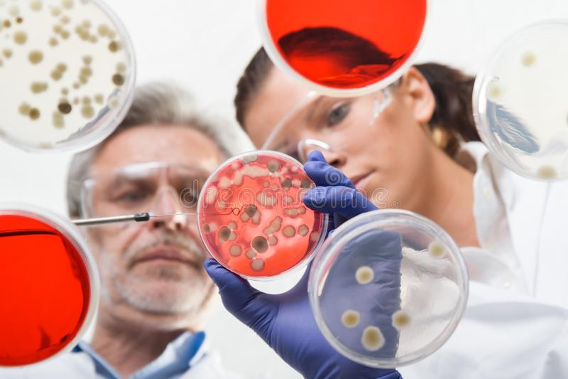 Het levenswetenschappers die in het gezondheidszorglaboratorium onderzoeken stock foto