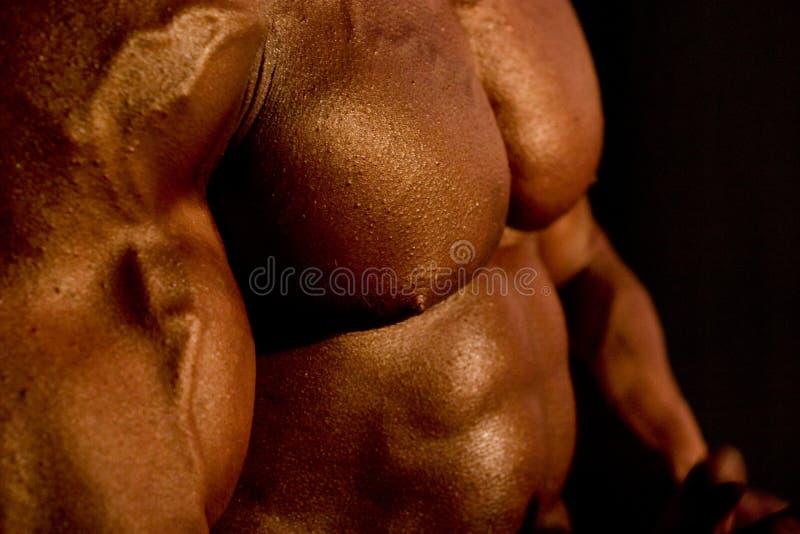 Het Lichaam Van De Bodybuilder Royalty-vrije Stock Afbeelding