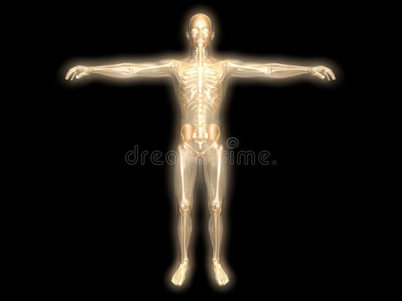 Het lichaam van de energie vector illustratie