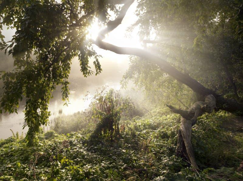 Het licht in de nevelige ochtend stock afbeelding