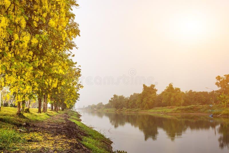 Het licht van de goedemorgentijd aan het leven stock afbeelding