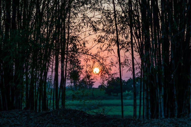 Het licht van de goedemorgentijd aan het leven royalty-vrije stock fotografie