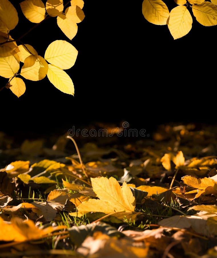 Het licht van de herfst stock afbeeldingen