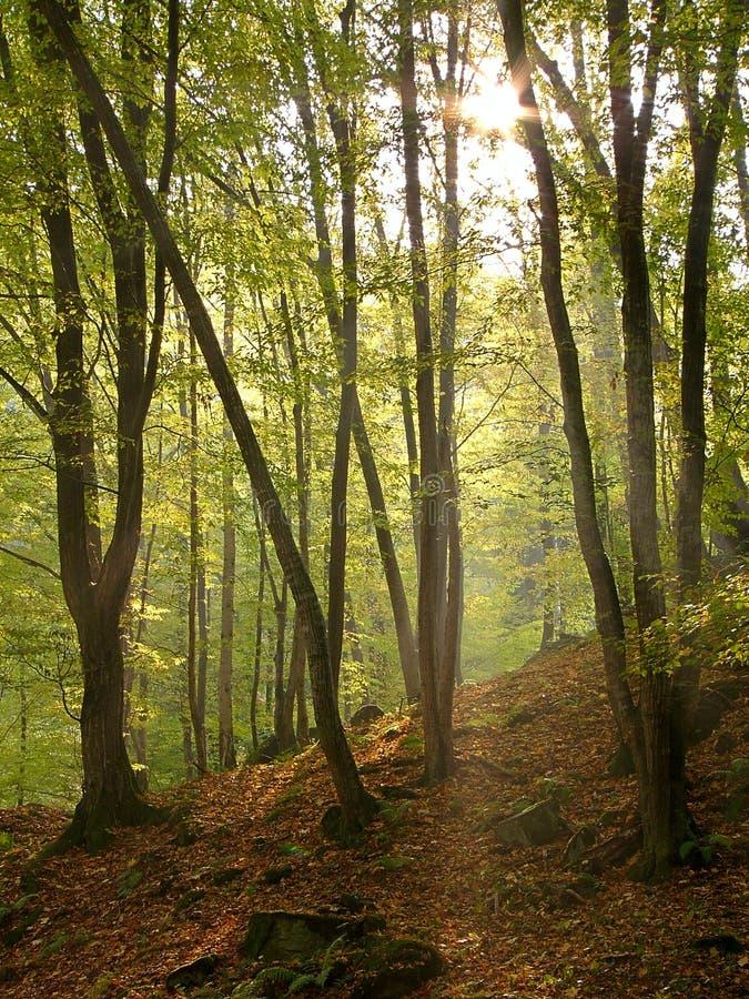 Het licht van de herfst stock fotografie