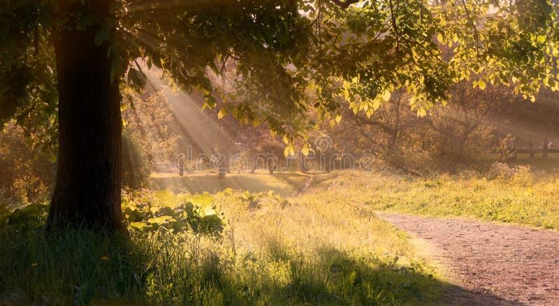 Het licht van de ochtend royalty-vrije stock afbeelding