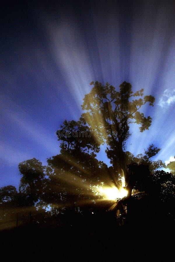 Het licht van de ochtend royalty-vrije stock afbeeldingen