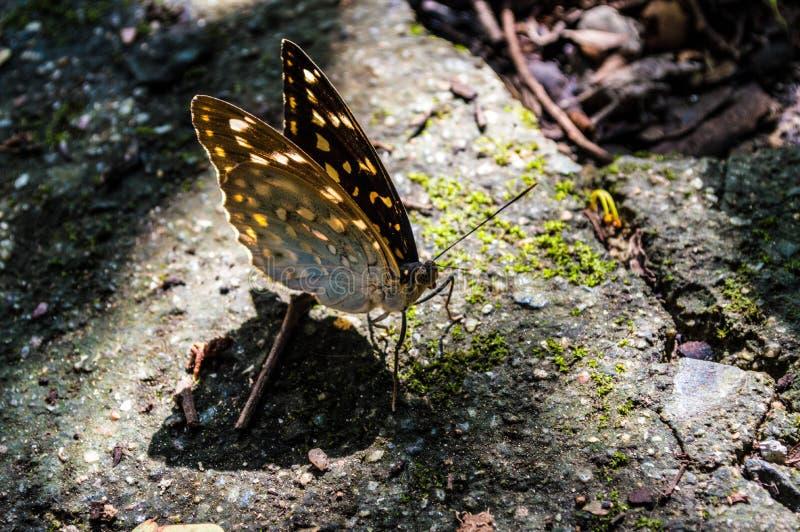 Het Licht van de vlinderschaduw van Aard stock fotografie