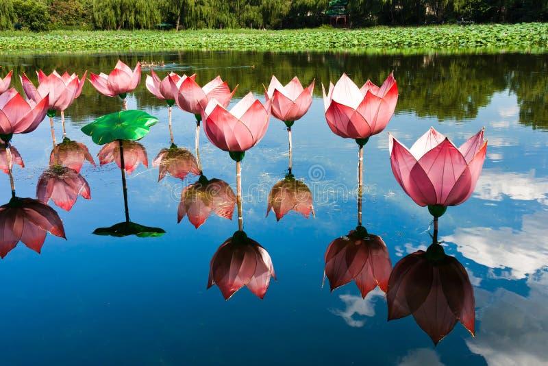 Het licht van Lotus in vijver royalty-vrije stock foto