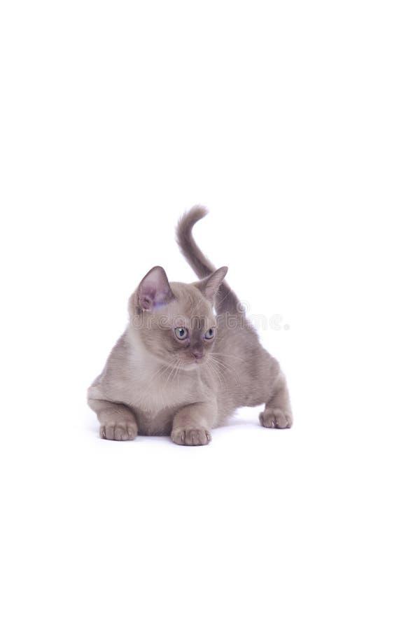 Het liggen kat royalty-vrije stock foto's