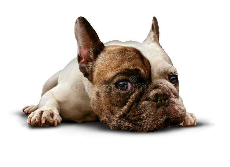 Het Liggen van de hond royalty-vrije stock foto