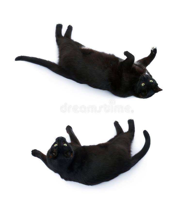 Het liggen zwarte die kat over de witte achtergrond wordt geïsoleerd stock afbeelding