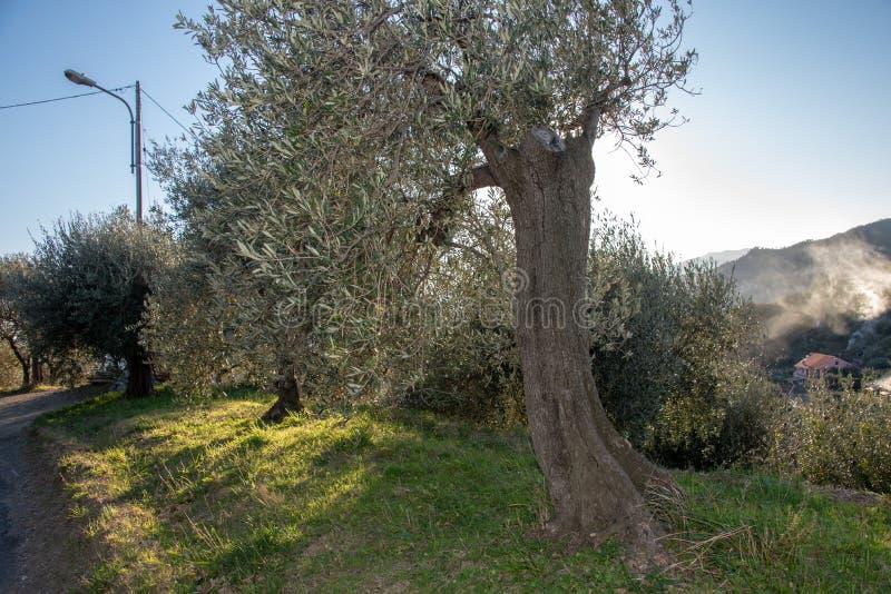 Het ligurian landschap royalty-vrije stock foto