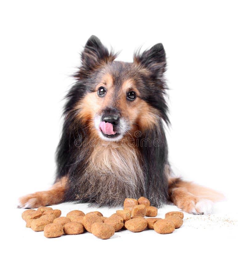 Het likken van hond royalty-vrije stock fotografie