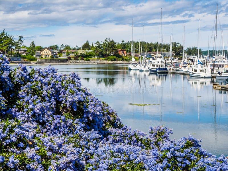 Het Lilac bloeien van Californië voor jachthaven met vastgelegde boten royalty-vrije stock afbeelding