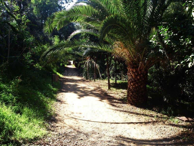 Het lineaire Park in Nicosia is meestal natuurlijke grond maar sommige gebieden zijn bedekt royalty-vrije stock foto