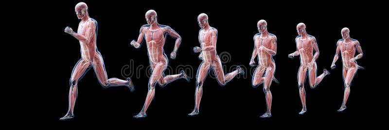 Het lopen bemant spieren stock illustratie