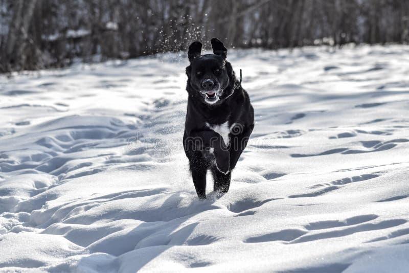 Het lopen binnen aan de sneeuw stock foto