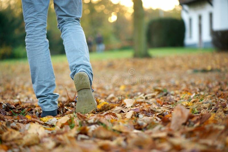 Het lopen in de Herfst stock fotografie