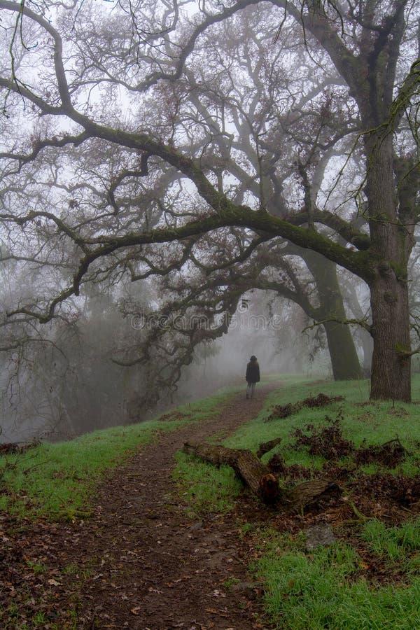 Het lopen in de nevelige bosweg stock foto's