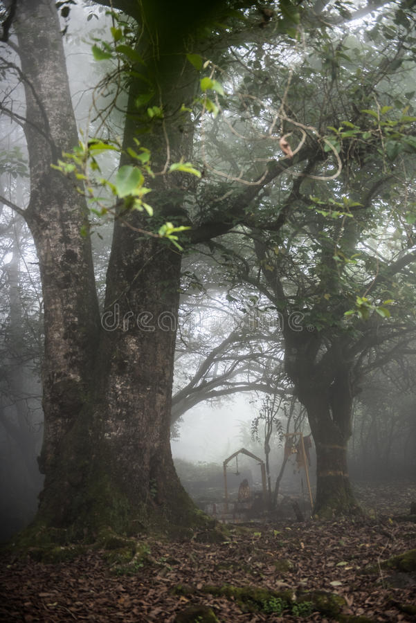 Het lopen door bos royalty-vrije stock fotografie