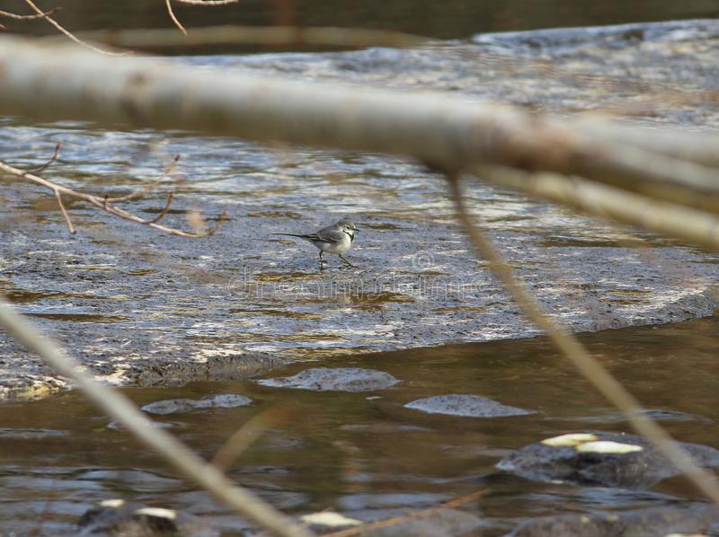 Het lopen door de rivier stock afbeeldingen