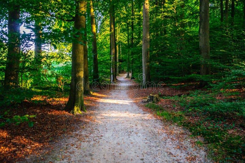 Het lopen door het Bos van Arnhem royalty-vrije stock afbeeldingen