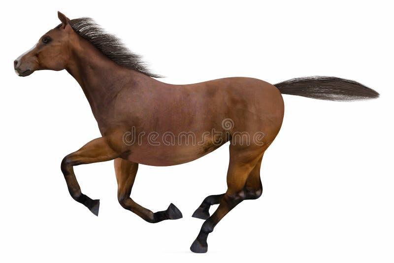 Het lopen geïsoleerd Paard stock foto's
