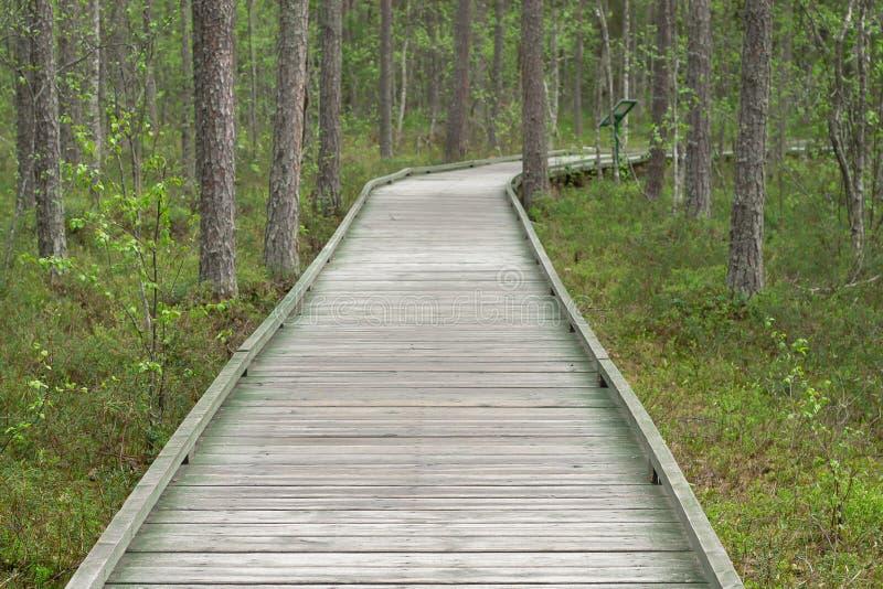 Het lopen, houten weg in het bos voor rust en gangen royalty-vrije stock fotografie
