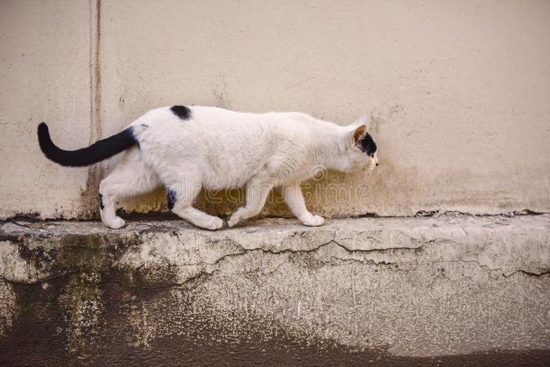 Het lopen kat op de straat royalty-vrije stock foto