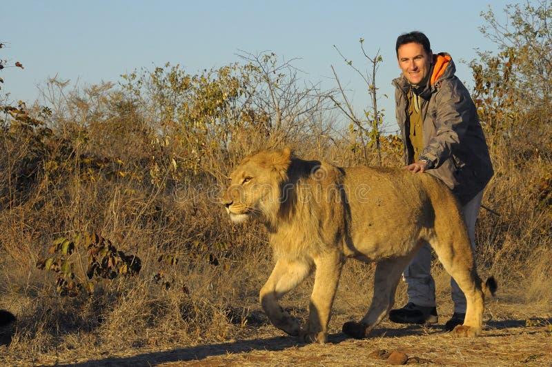 Het lopen met een leeuw royalty-vrije stock foto's