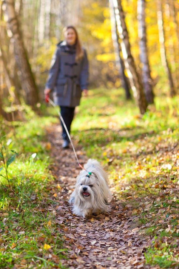 Het lopen met hond stock fotografie