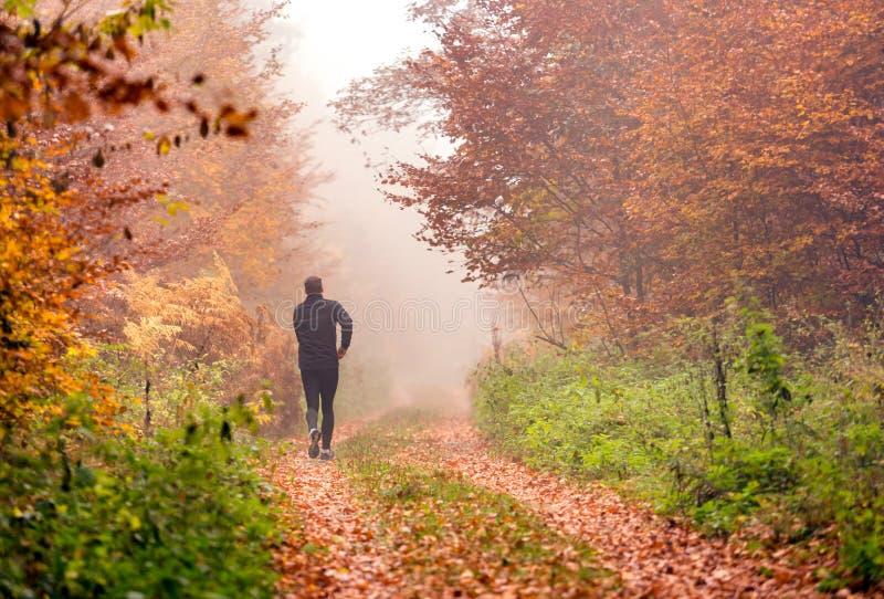 Het lopen in mistig de herfstbos royalty-vrije stock foto's