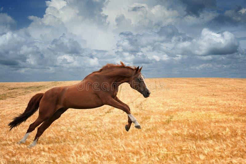 Het lopen paard royalty-vrije stock afbeeldingen