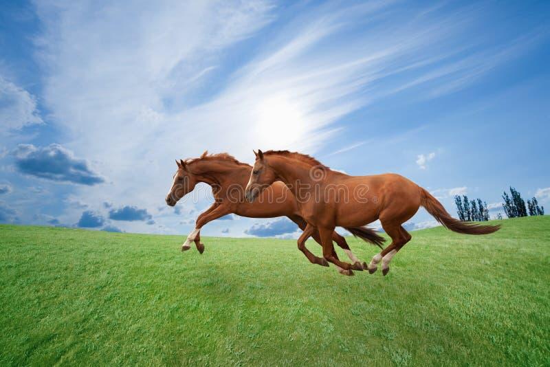 Het lopen paarden royalty-vrije stock afbeelding