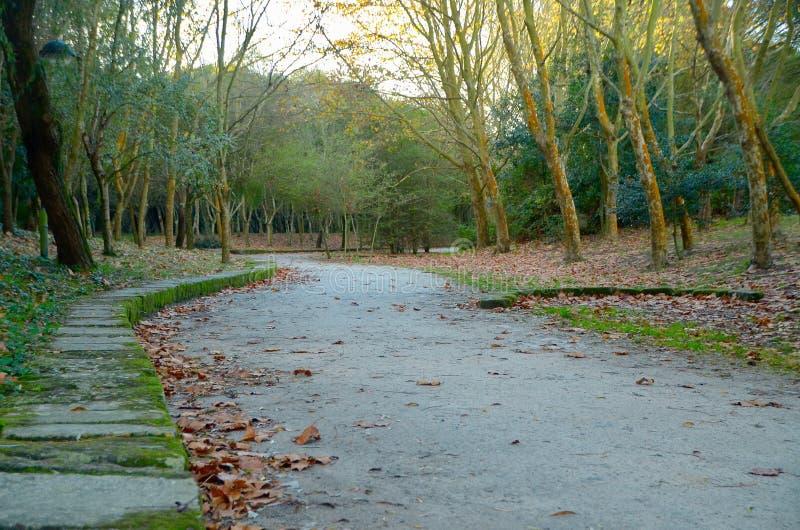 Het lopen in het Park stock afbeeldingen