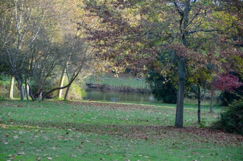 Het lopen in het Park stock foto