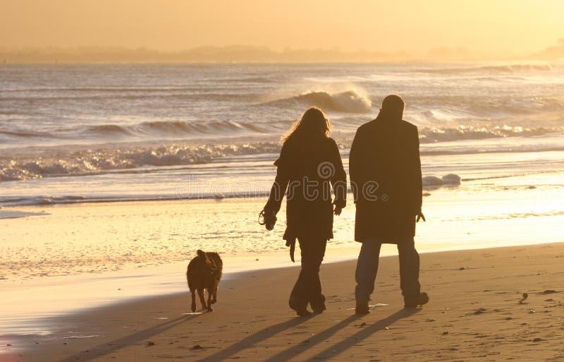 Het lopen van de Hond royalty-vrije stock foto