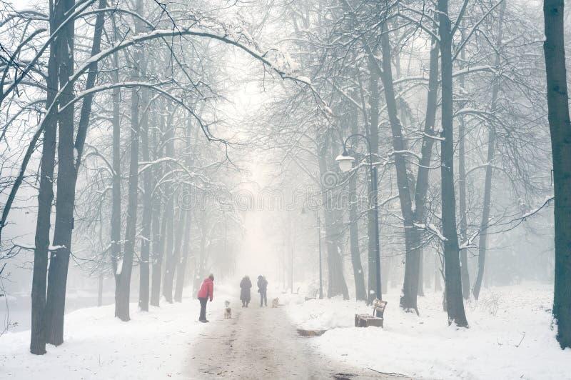 Het lopen van de hond in de mist stock afbeeldingen