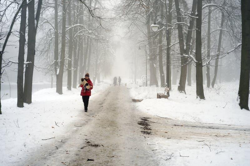 Het lopen van de hond in de mist royalty-vrije stock afbeelding