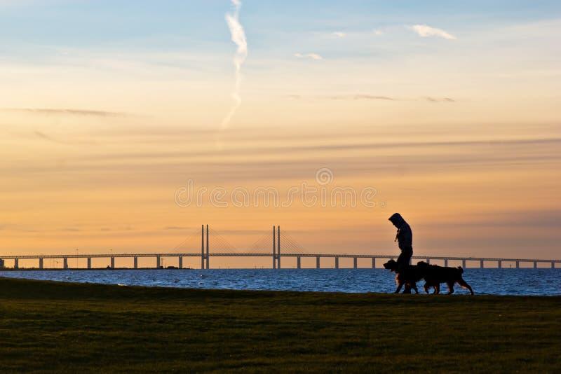 Het lopen van de Honden royalty-vrije stock foto's