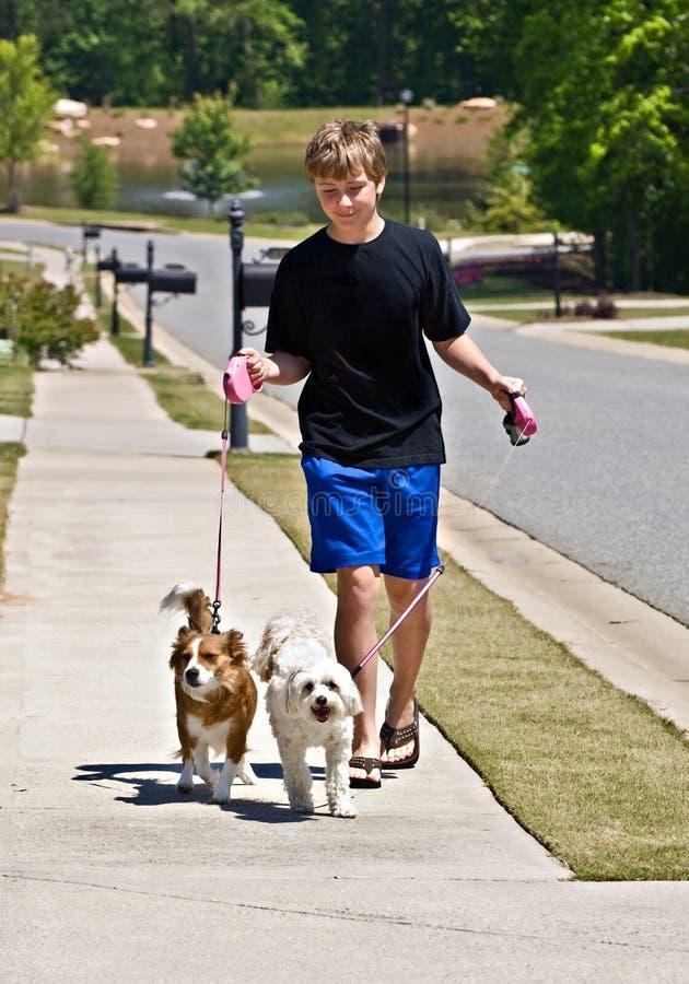 Het Lopen van de jongen Honden stock foto