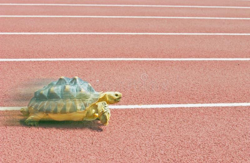 Het lopen van de schildpad royalty-vrije stock fotografie