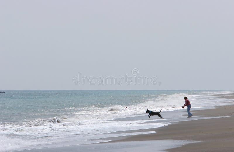 Het lopen van de vrouw hond op strand met ruwe overzees royalty-vrije stock foto's