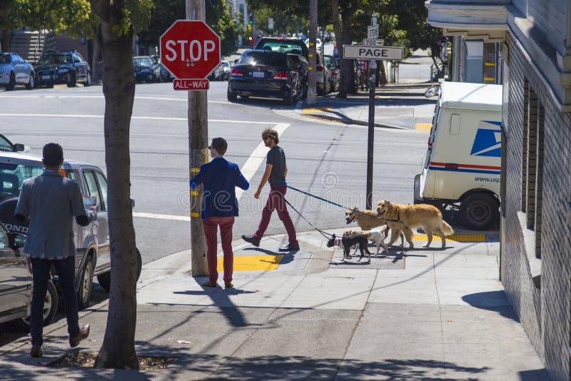 Het lopen van het pak/serie honden door een jonge mens op het gebied van Haight Ashbury van San Francisco, Californië de V.S. stock afbeelding