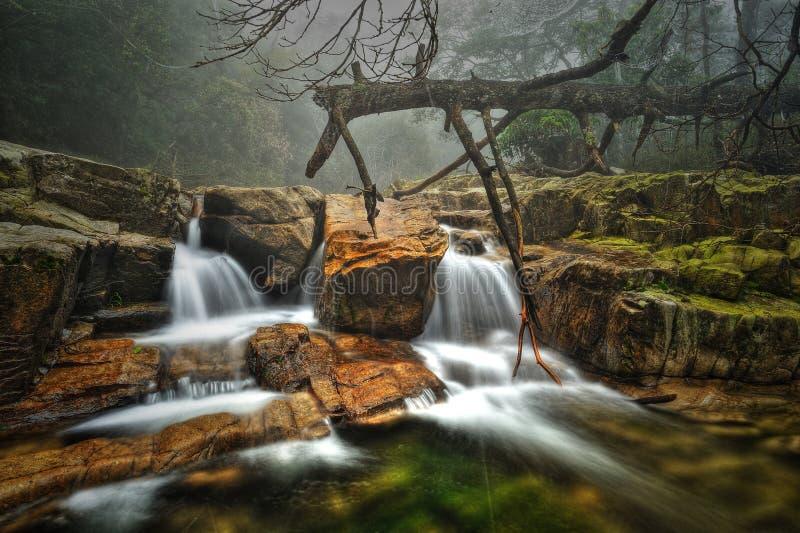Het lopen van het water royalty-vrije stock foto's