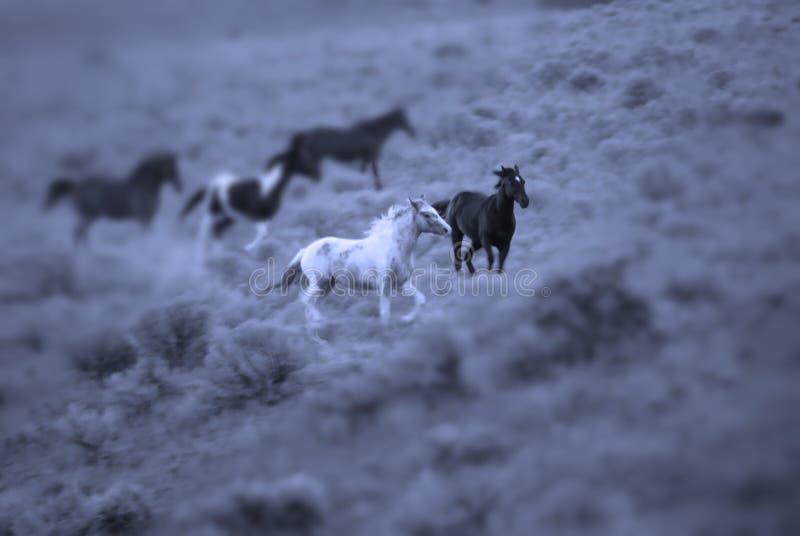 Het Lopen van paarden stock foto