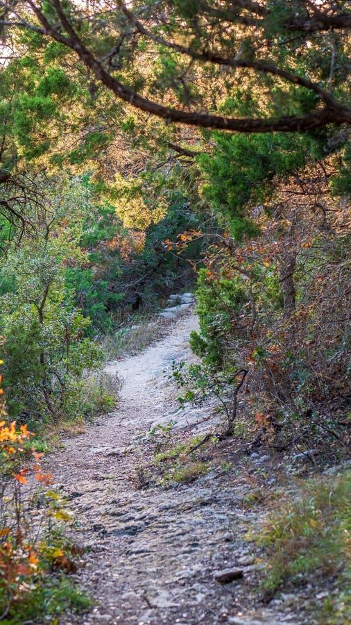 Het lopen van slepen in een stil, rustig, vreedzaam bospark met trillende groene bomen en vegetatie royalty-vrije stock foto